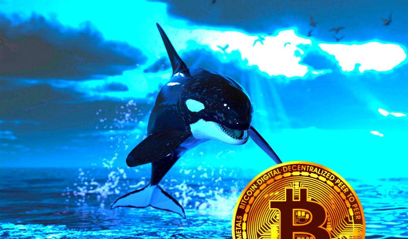نهنگ کریپتو 50،000،000 دلار بیت کوین به بایننس انتقال داد