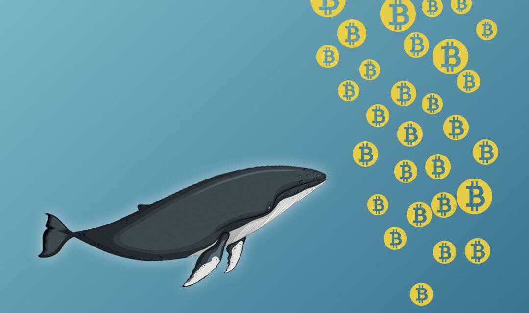 آیا نهنگ های بیت کوین برگشتند؟
